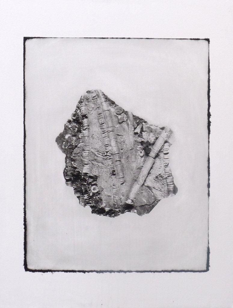 Crinoid fossil (recto), 2015.