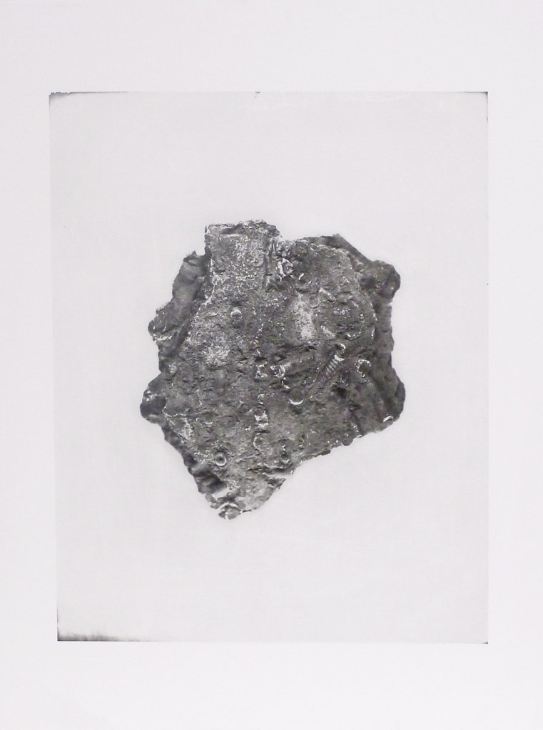 Crinoid fossil (verso), 2015.
