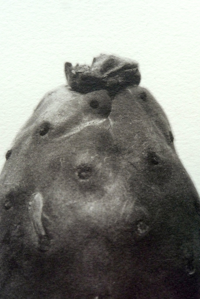 Prickly pear (detail), 2016.
