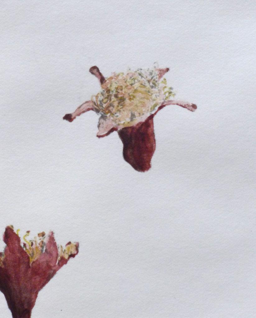 Pomegranate flowers (detail), 2016.