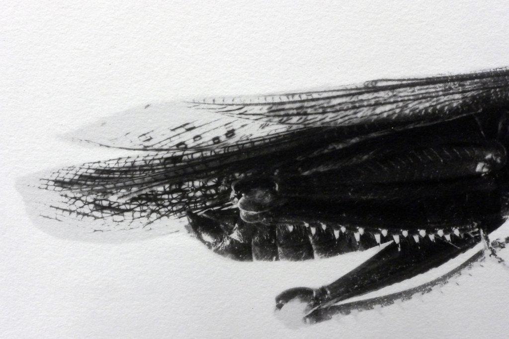 Locust II (detail), 2016.