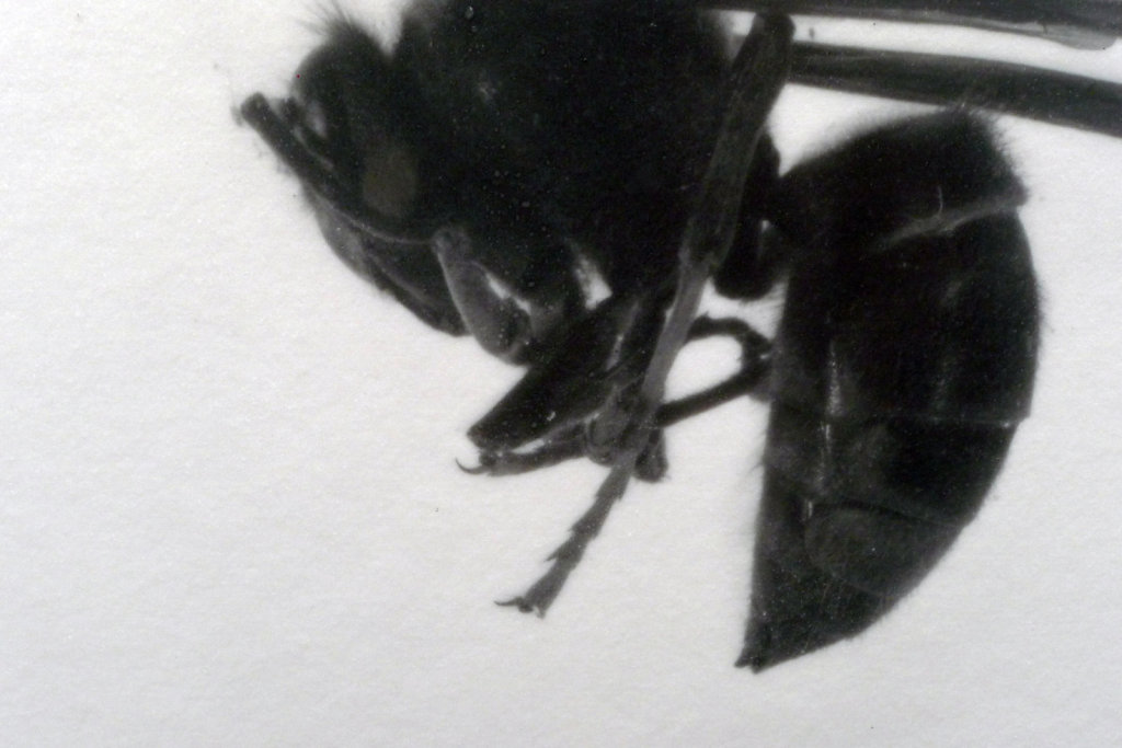 Stinger (detail), 2016.